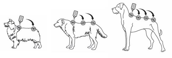 Cães_Activyl Tick Plus.jpg