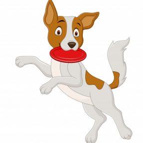 Actividades de Exterior, Açaimes, Treino, Obediência, Dog Activity