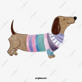 Roupa para cães
